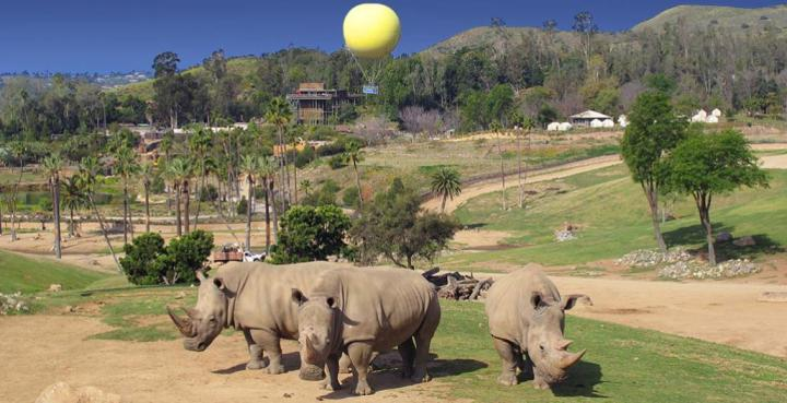 balboa zoo